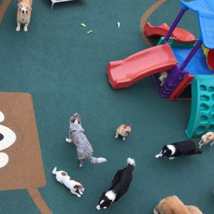 revestimento de borracha ecológica para pets
